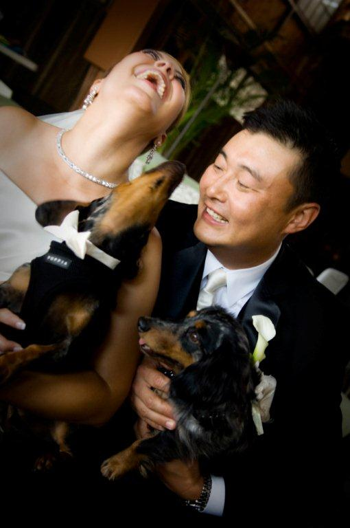 Wedding Ceremonies with Beloved Pets